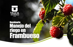 banner_seminario_frambueso